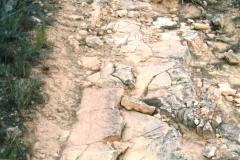 CaminoNoguera2