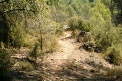 CaminoNoguera4