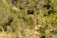 CaminoNoguera12