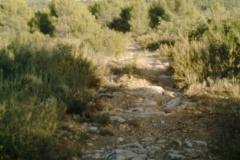 CaminoNoguera14