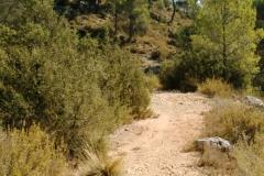 CaminoNoguera7